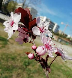 springishere